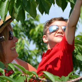 Grandma helping with the Pick-Your-Own Cherries, like only Grandma can!