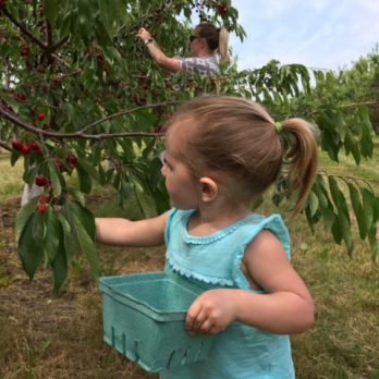 Family togetherness grows in Monroe's Orchard cherry orchard!