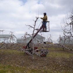 March 2014 pruning
