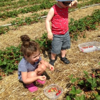 Learning to Pick-Your-Own Strawberries is a family affair!
