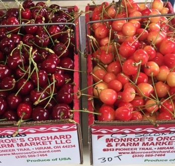 Pick-Your-Own Cherries
