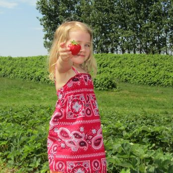 How can you resist?  Pick-Your-Own Strawberries at Monroe's Orchard!