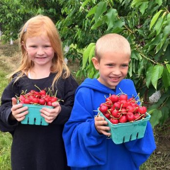 Cousins picking cherries!  Great job!
