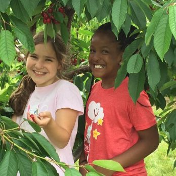 Friendship grows while harvesting cherries!