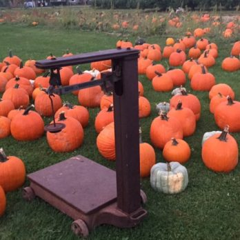 Choose your pumpkin from the field, bin or yard at Monroe's Orchard!