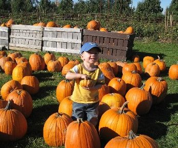 Small, medium, large and jumbo pumpkins at Monroe's Orchard!
