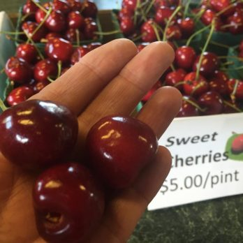 Sweet and tart cherries available for PYO or pre-picked!