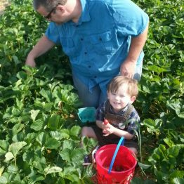 Father-son time while picking strawberries!