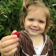 Picking Raspberries at Monroe's Orchard