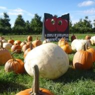 Pick your pumpkins from the yard, or the pumpkin patch
